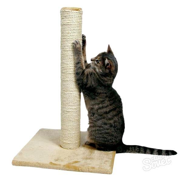 Як привчити кішку дерти шпалери