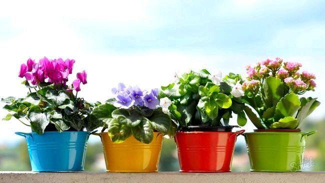 Як перевезти квіти