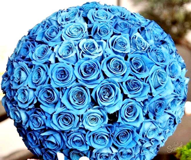 Як пофарбувати троянди в синій колір
