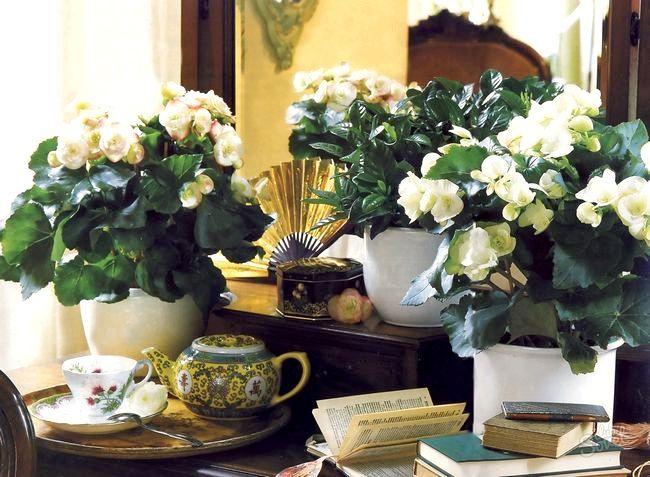 Як поливати кімнатні квіти