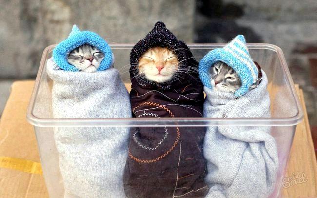Коти_младенци