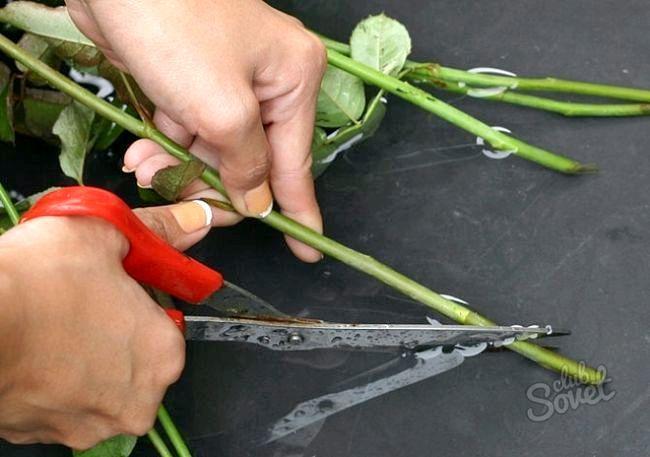 Як зберегти троянди у вазі