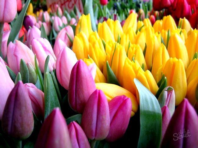 Як зберегти тюльпани свіжими