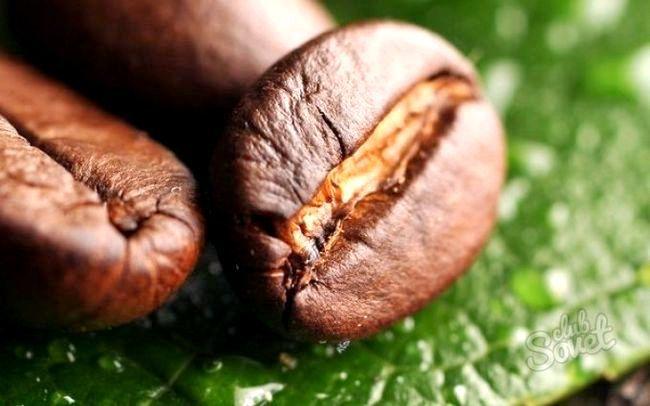 Як виростити кавове дерево будинку
