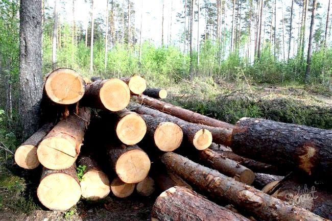 Як взяти в оренду ліс