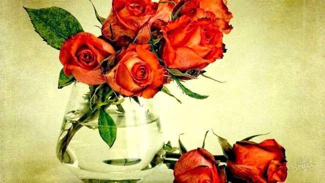 Як засушити троянди