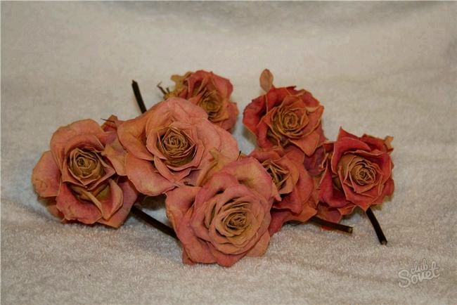 Рози2