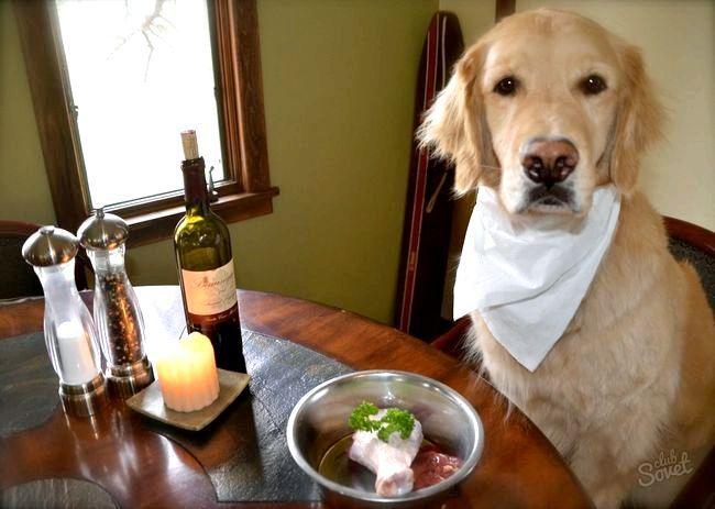 Як і чим годувати цуценя і собаку