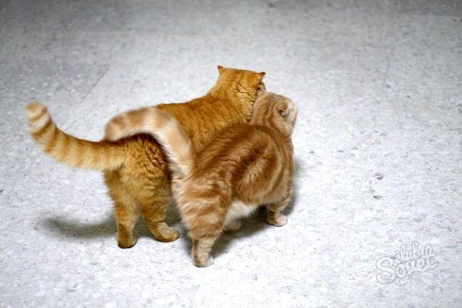 Коти3